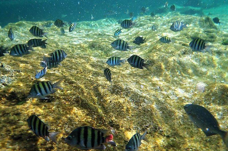 Laguna Yal-ku – Riviera Maya